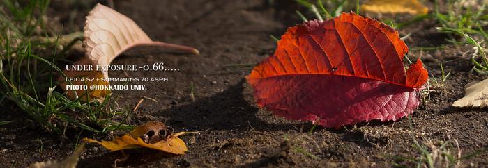 Leaf_1_5
